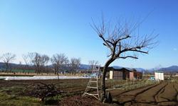 地球農園写真