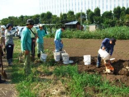 発酵生ごみを畑に埋めると3週間ですべて土に