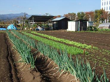 おいしい野菜がたくさん採れます