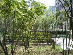 スカイガーデンビル庭園