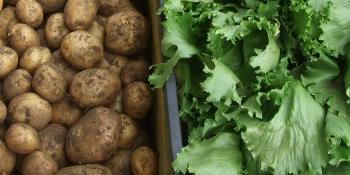 野菜販売先紹介